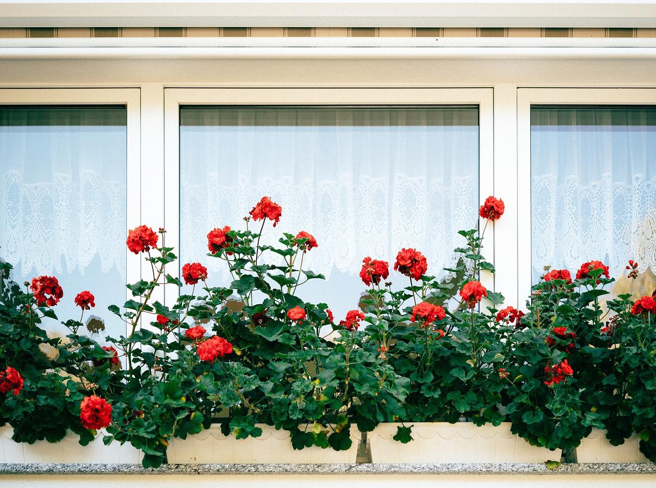 A qui faire appel pour rénover ses fenêtres en bois ?